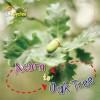 Acorn to Oak Tree - Camilla De la Bédoyère