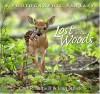 Lost in the Woods - Carl R. Sams II, Jean Stoick