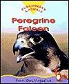 Peregrine Falcon: Endangered Animals Series - Sylvia Funston, Olena Kassian, Owl Magazine