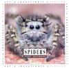 Spiders - Janet Halfmann
