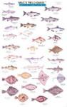Mac's Field Guide to Northwest Coastal Fish (Mac's Field Guides) - Craig MacGowan