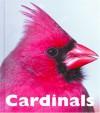 Cardinals - Patrick Merrick