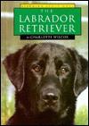 The Labrador Retriever - Charlotte Wilcox