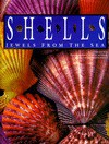 Shells: Jewels from the Sea - M.G. Harasewych, Murray Alcosser