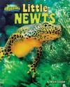 Little Newts - Meish Goldish