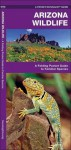 Arizona Wildlife: A Folding Pocket Guide to Familiar Species - James Kavanagh, Raymond Leung