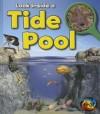 Tide Pool (Look Inside) - Louise Spilsbury