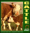 Cattle - Dorothy Hinshaw Patent, William Muñoz