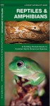 Reptiles & Amphibians: A Folding Pocket Guide to Familiar North American Species - James Kavanagh, Raymond Leung