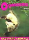 Opossums (Backyard Animals) - Christine Webster