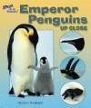 Emperor Penguins Up Close - Carmen Bredeson