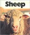 Sheep - Peter Murray