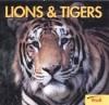 Lions & Tigers - Joanne Mattern