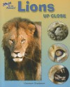 Lions Up Close - Carmen Bredeson
