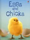 Eggs and Chicks (Usborne Beginners) - Fiona Patchett, Tetsuo Kushii, Zoe Wray