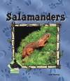 Salamanders - Julie Murray