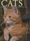 CATS - Tom Howard