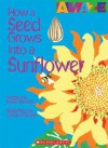 How a Seed Grows Into a Sunflower - David Stewart