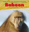 Baboon - Louise Spilsbury