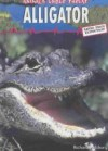 Alligator - Richard Spilsbury
