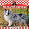 Shetland Sheepdogs - Joanne Mattern