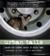 Urban Tails: Inside the Hidden World of Alley Cats - Paul L. Knox, Sarah Neely