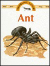 Ant - Stephen Savage
