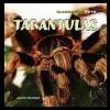 Tarantulas - Joanne Randolph