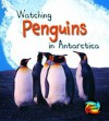 Watching Penguins in Antarctica (First Library: Wild World) - Louise Spilsbury, Richard Spilsbury