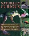 Naturally Curious: A Photographic Field Guide and Month-By-Month Journey Through the Fields, Woods, and Marshes of New England - Mary Holland
