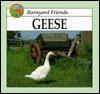 Geese - Jason Cooper
