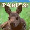 Moose Babies! - Henry H. Holdsworth