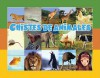 Chistes de Animales = Fun with Animals - Amy White, Lada J. Kratky