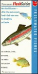 Peterson Flashguide to Freshwater Fishes (Peterson Flashguides (R)) - Roger Tory Peterson, John P. Sherrod