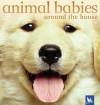 Animal Babies Around the House - Kingfisher, Kingfisher