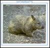 Wombats (Australian Animal Discovery Library) - Lynn M. Stone