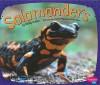 Salamanders - Molly Kolpin, Gail Saunders-Smith