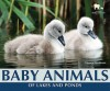 Baby Animals of Lakes and Ponds - Carmen Bredeson