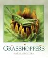 Grasshoppers - Valerie Bodden