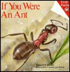 If You Were an Ant - S.J. Calder