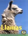 Llamas - Dorothy Hinshaw Patent