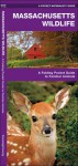Massachusetts Wildlife: A Folding Pocket Guide to Familiar Species - James Kavanagh, Raymond Leung