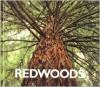 Redwoods - Peter Murray