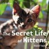 The Secret Life of Kittens - David Taylor, Mark Read