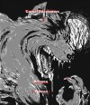 Carnal Encounters, The Werewolf / Brianna ( Wolven ) - Dr Ludwig Spunkel, yakoomi d6ckg
