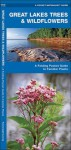 Great Lakes Trees & Wildflowers: A Folding Pocket Guide to Familiar Species - James Kavanagh, Raymond Leung