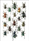 "CHRISTOPHER MARLEY WALKING WEEVILS 5"" X &"" UNLINED NOTEPAD - Christopher Marley"
