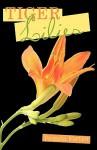 Tiger Lilies - Pamela Fortier