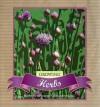 Growing Herbs - Murdoch Books