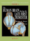The Human Brain During the Late First Trimester - Shirley A. Bayer, Joseph Altman